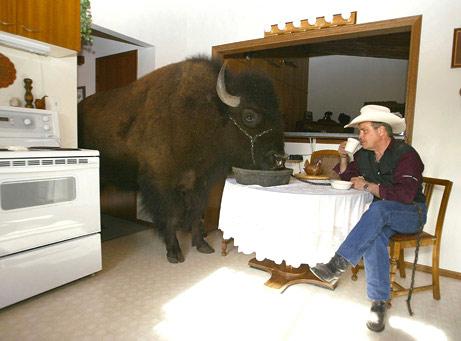 buffalo_big