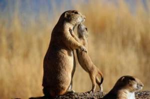 prairie-dog-plague-1