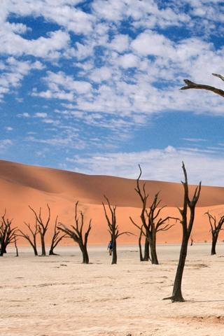 6264-dying-desert