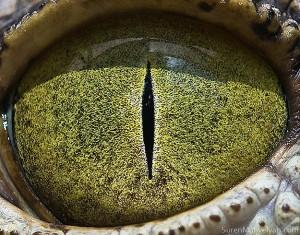 wild-animal-eye-retinas-2