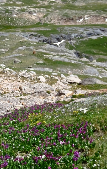 Reg Saner Rocks