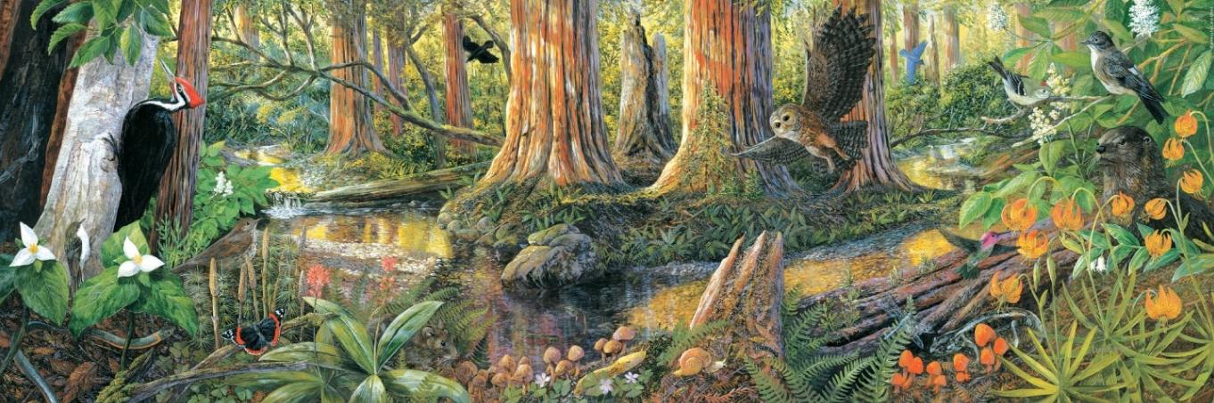 EIfert Muir Woods Old Growth Panel