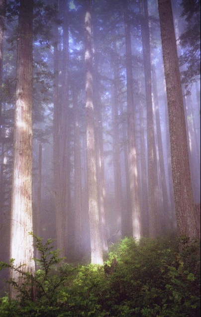 DeaneTR_Headwaters_Forest